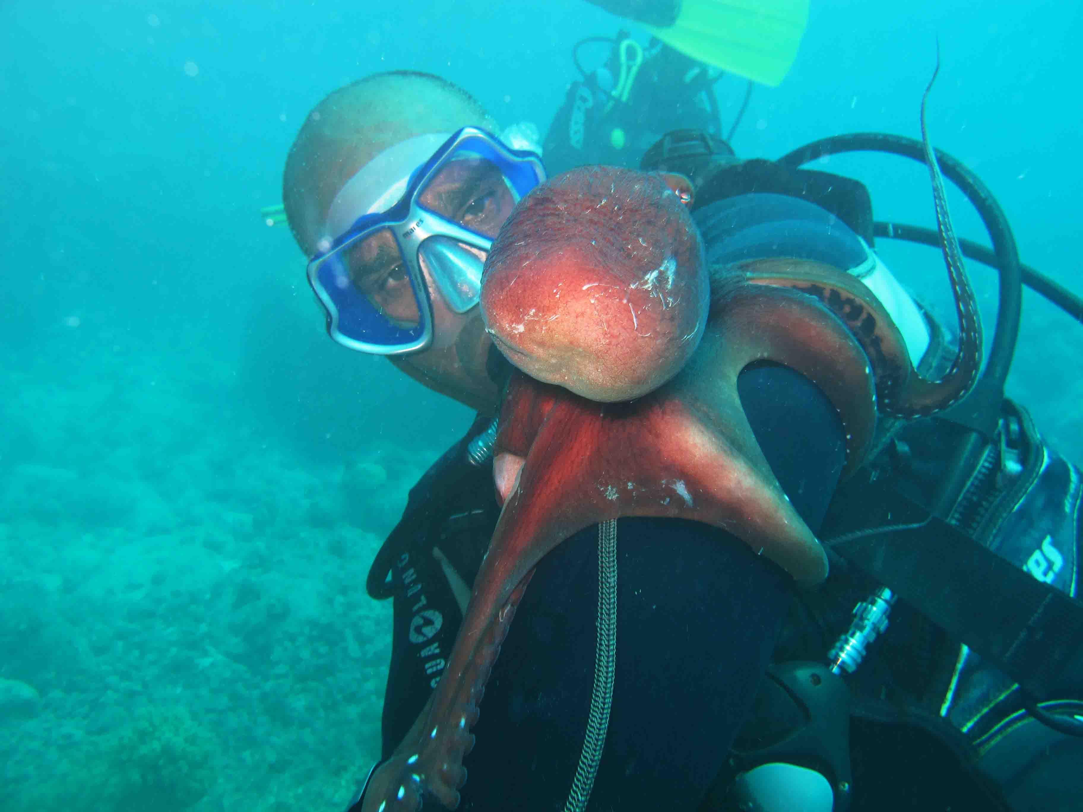 Seaman Diving Mauritius