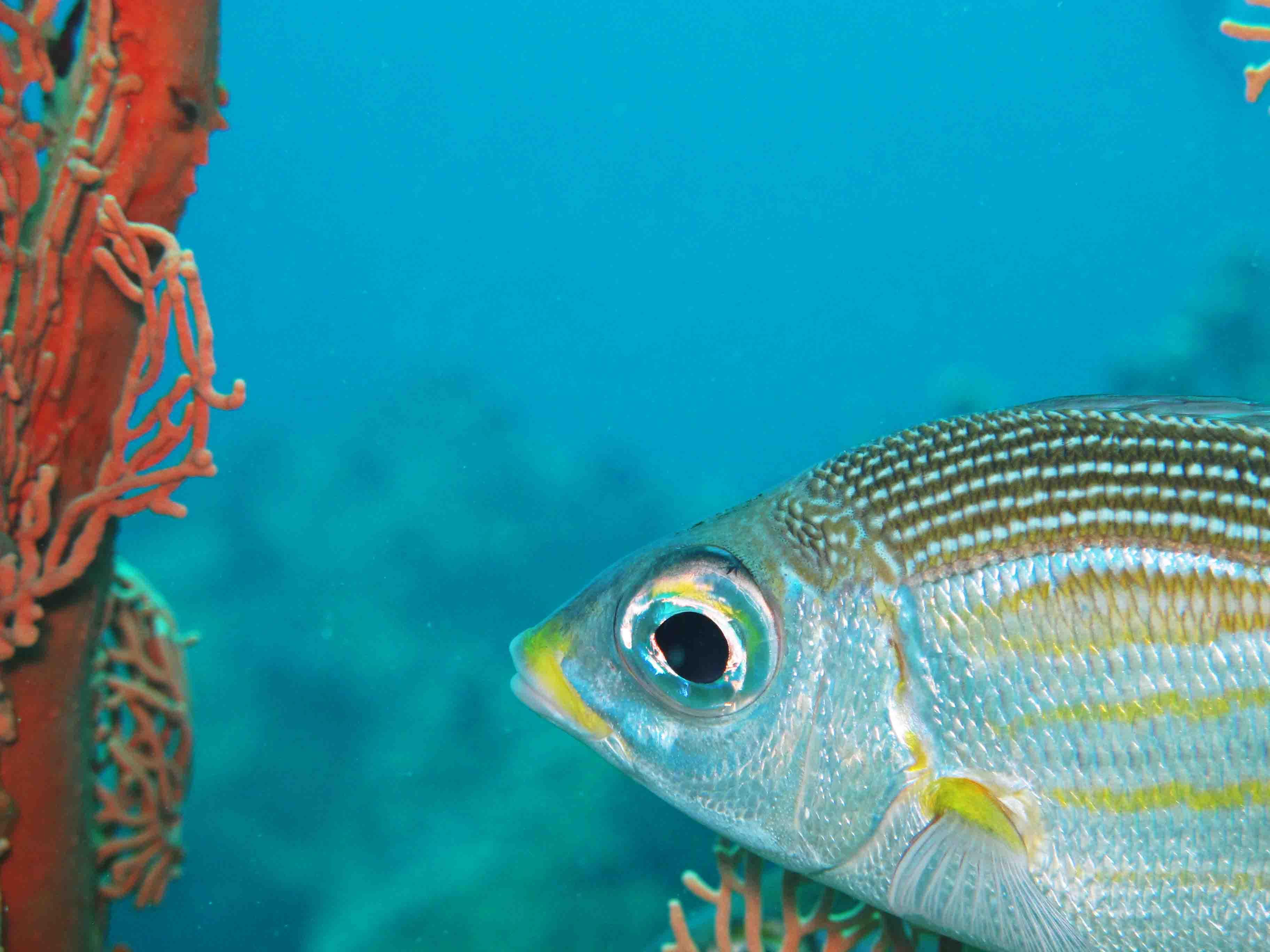 Mauritius underwater