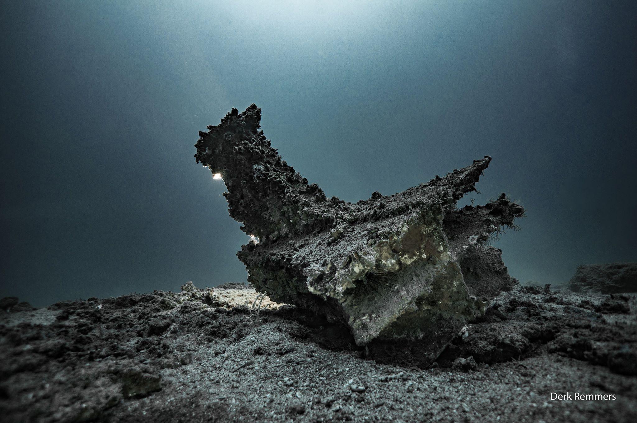 Rostro ritrovato alle Isole Egadi