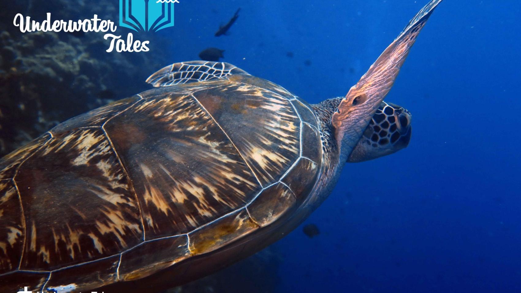 manado-bunaken-underwatertales-tartaruga-11