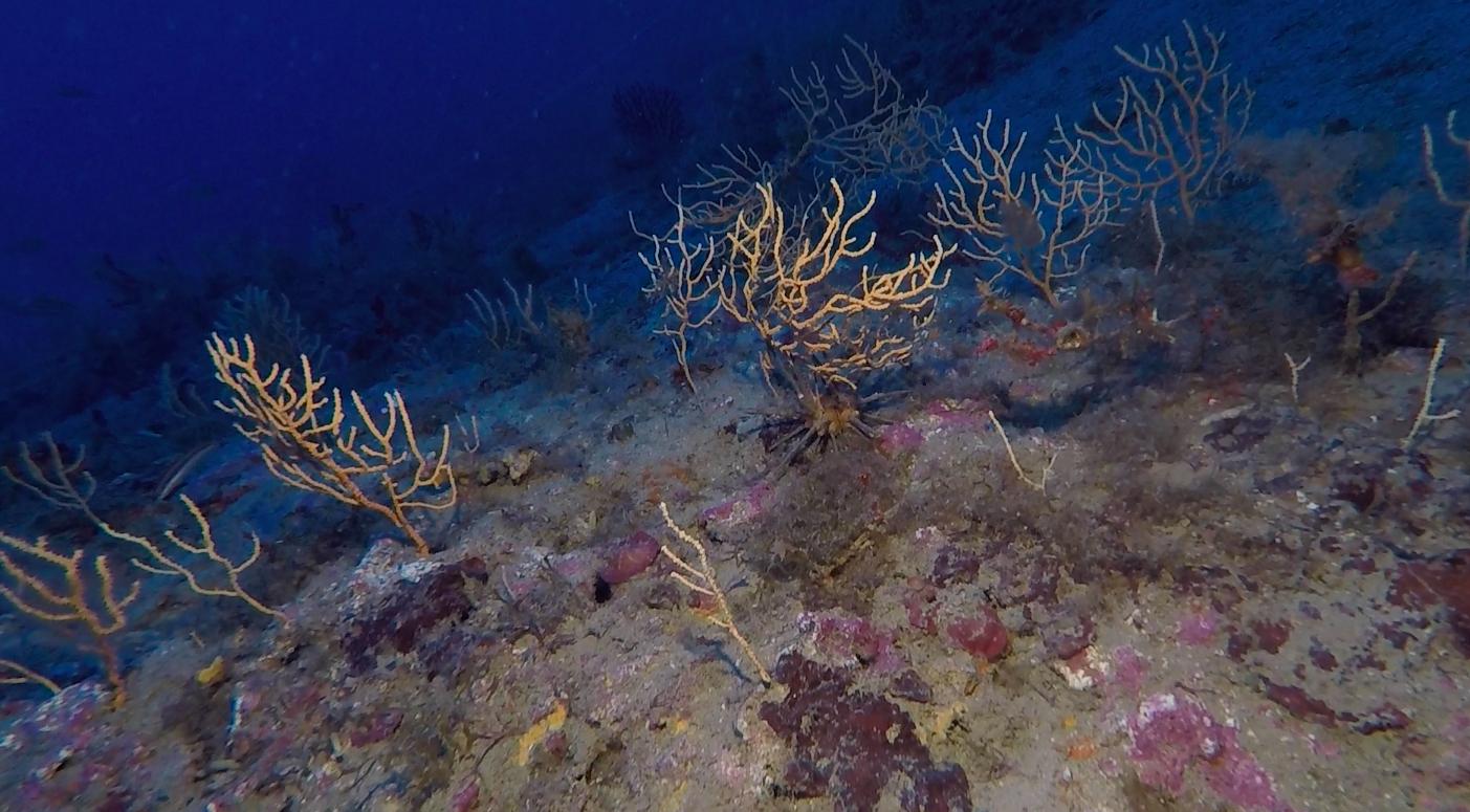 Questo sito di immersione al largo di Santo Stefano al Mare si presenta come una cigliata molto bassa che in alcuni tratti sembra addirittura una semplice distesa di sabbia con alcune escrescenze rocciose posizionate qua e là, in un'aera di circa duecento metri di diametro, ad una profondità di 55 metri.