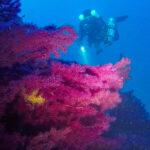 Un subacqueo tra le gorgonie delle Formiche della Zanca