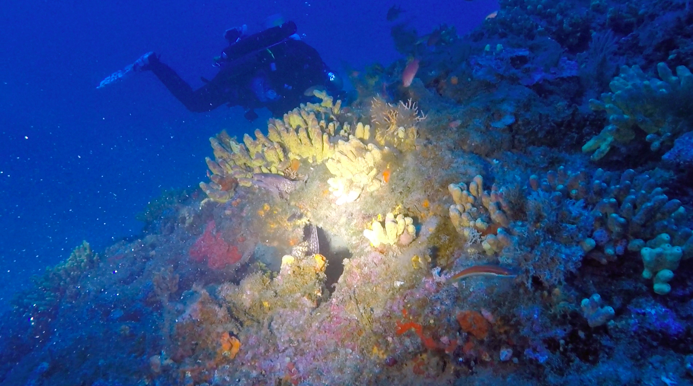 Una franata e un lungo canalone di sabbia, tra massi ricoperti di spugne gialle ed arancioni. Inizia così l'immersione alle Formiche della Zanca.