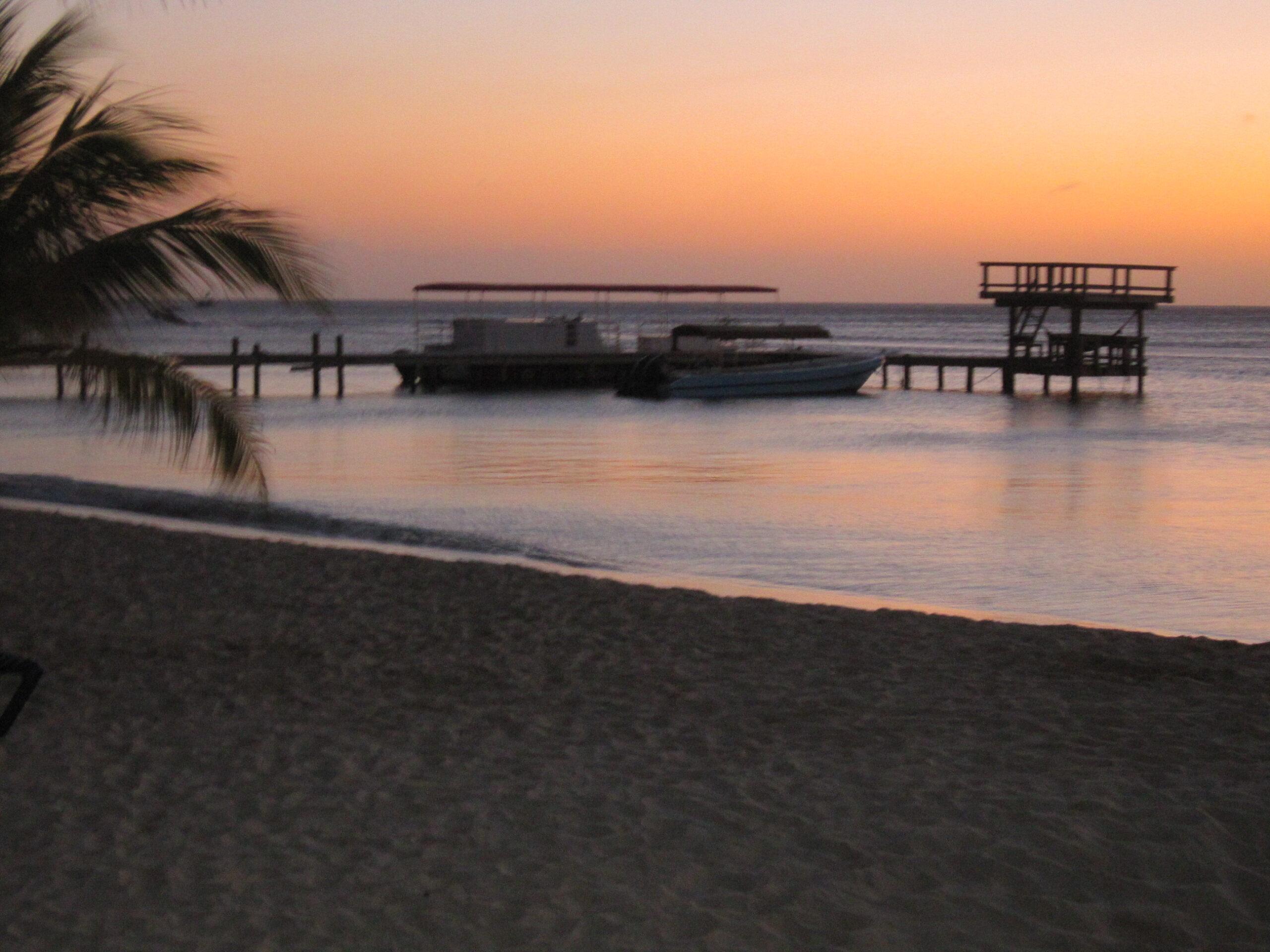 La lumaca dalla lingua di fenicottero (Cyphoma gibbosum) vive nei mari caldi, in particolare nei tratti tropicali dell'Oceano Atlantico occidentale, dalla Carolina del Nord alla costa settentrionale del Brasile. È diffusissimo nelle Bermuda, nel Mar dei Caraibi, nel Golfo del Messico e al largo delle Piccole Antille.
