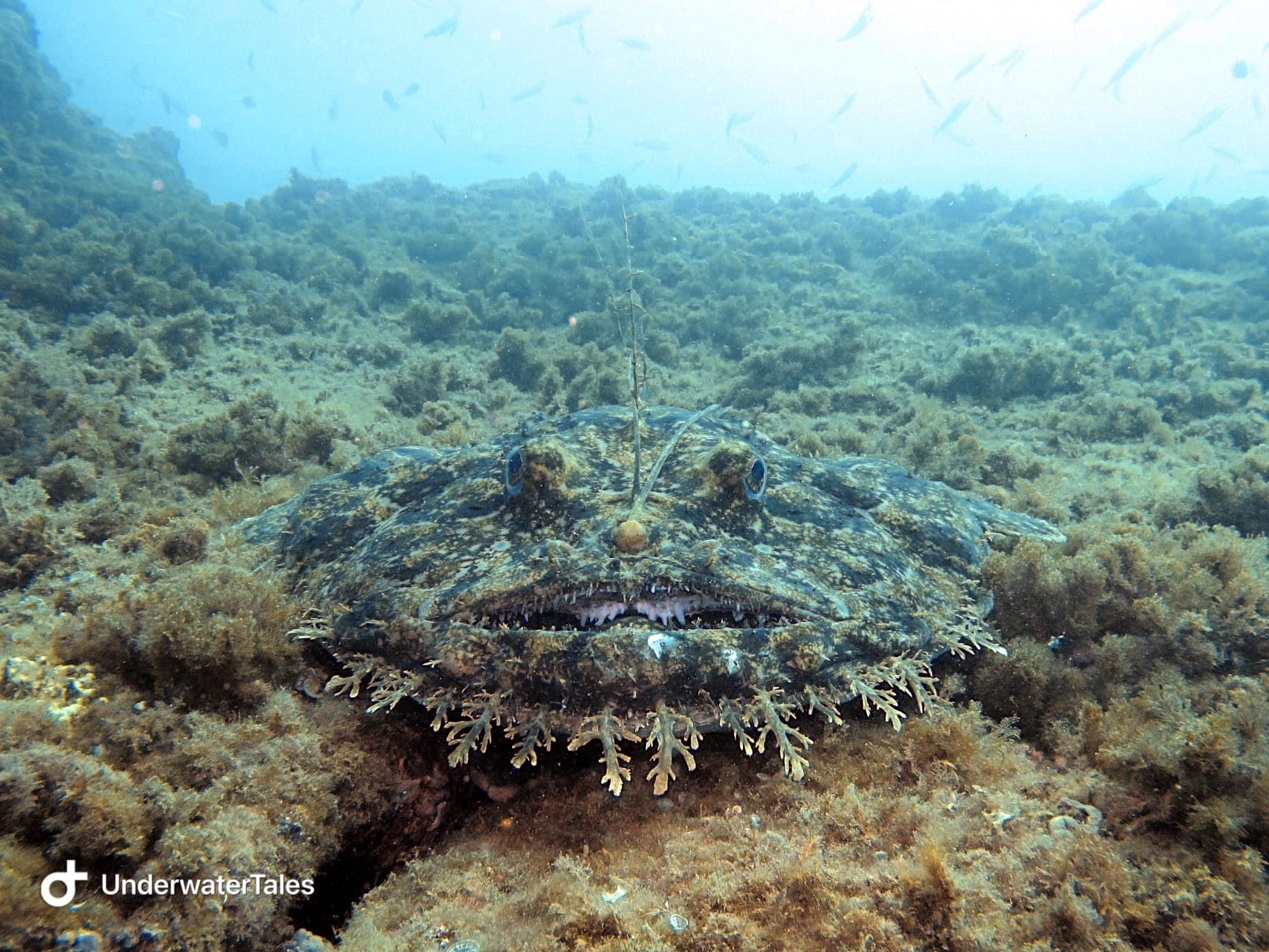 La bocca della rana pescatrice