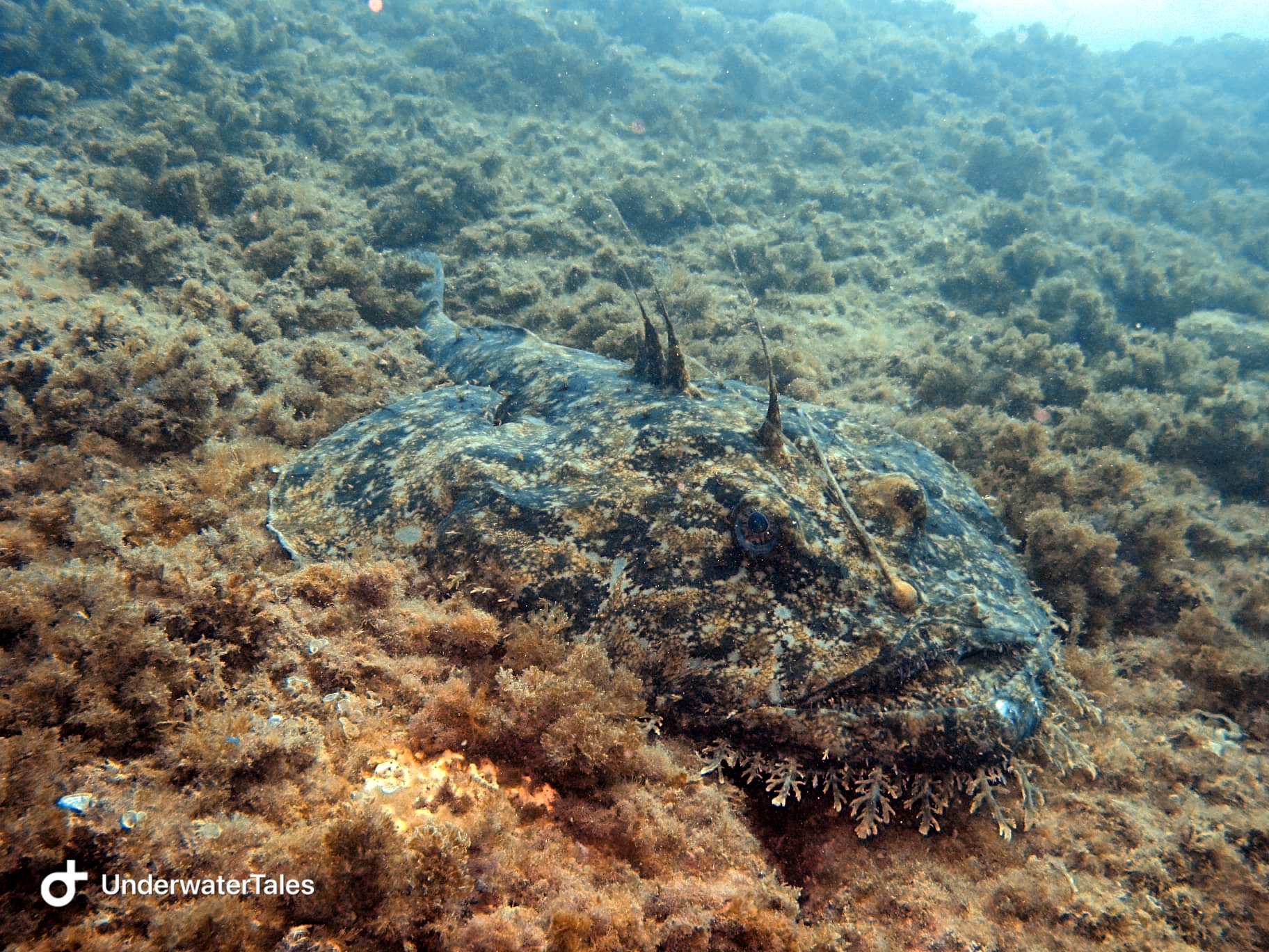 La rana pescatrice di Portofino