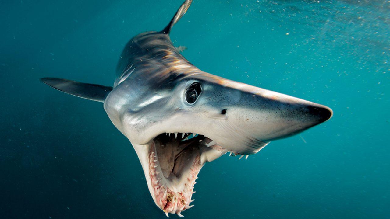 I 5 pesci più veloci al mondo