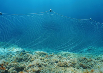 Andando verso attività ittiche sostenibili