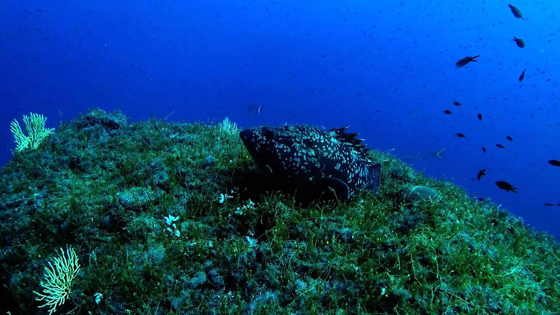 Immersione a Portofino: Secca Carega
